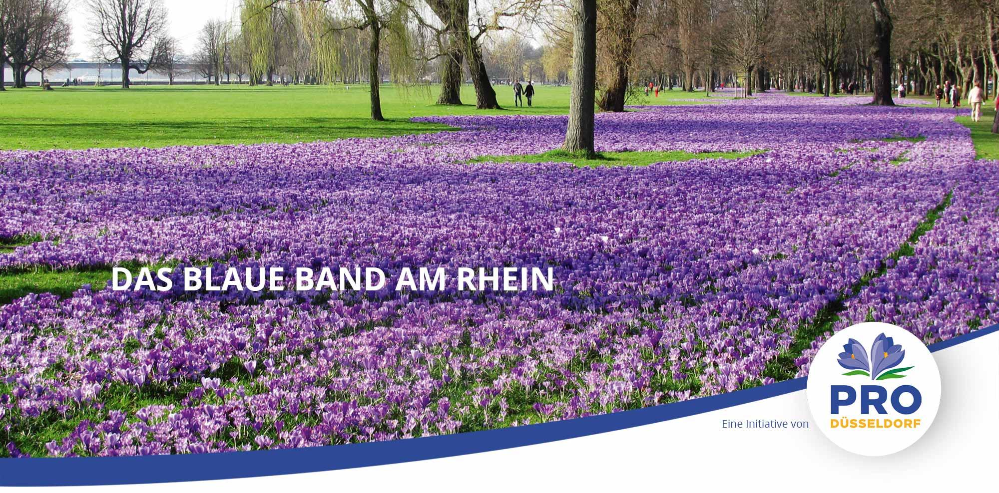 Das Blaue Band / Krokusfelder im Rheinpark